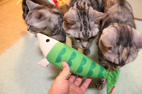 2010年11月魚0.JPG