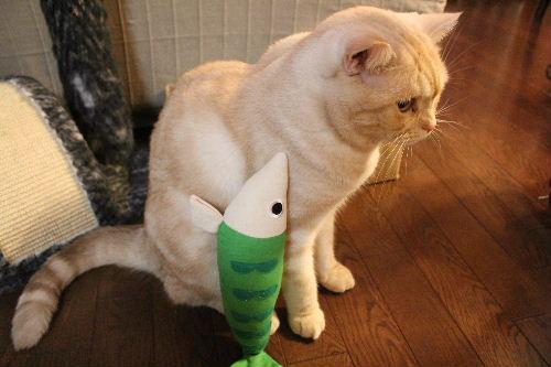 2010年11月魚5.JPG