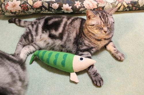 2010年11月魚8.JPG