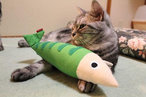 2010年11月魚9.JPG