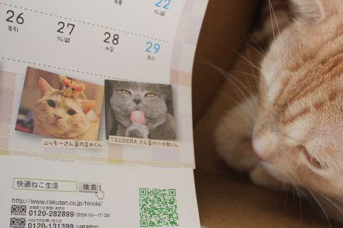 2010年12月キヤ4.JPG