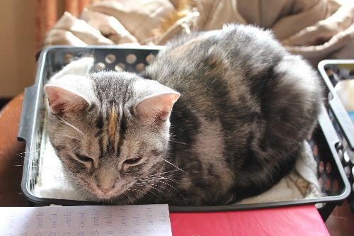 2010年12月女子2.JPG