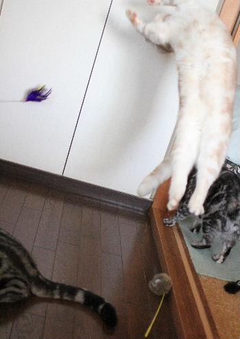 2010年12月思い切り4.JPG