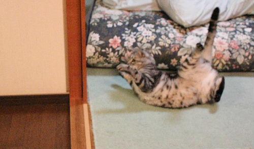2010年12月思い切り8.JPG