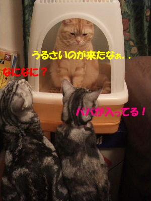 2010年1月トイレ0.JPG