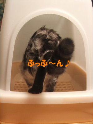 2010年1月トイレ4.JPG