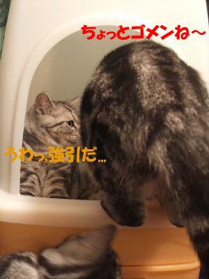 2010年1月トイレ7.JPG