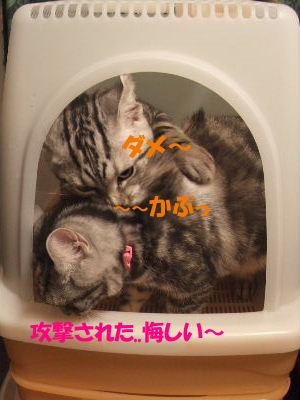 2010年1月トイレ9.JPG