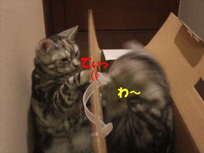 2010年1月ヘルス箱5.JPG