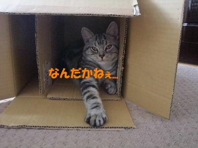 2010年1月圭アル3.JPG