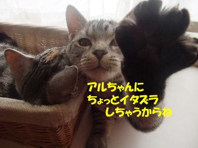 2010年1月姉弟2.JPG