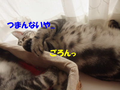 2010年1月姉弟7.JPG