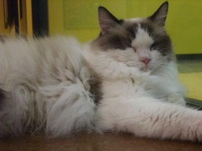 2010年1月猫カフェ9.JPG