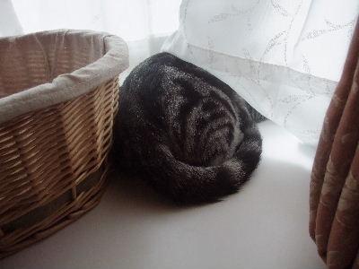 2010年1月窓辺1.JPG