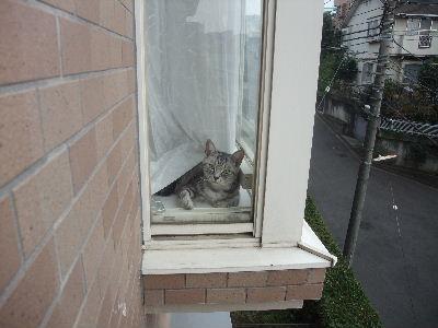 2010年1月窓辺2.JPG