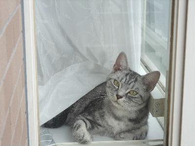 2010年1月窓辺4.JPG