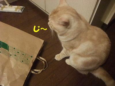 2010年1月紙袋1.JPG