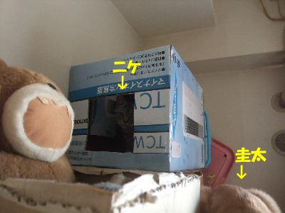 2010年1月置物5.JPG