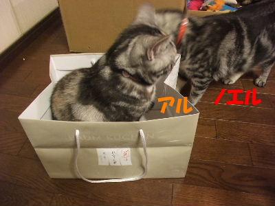2010年2月ねんりんやリ2.JPG