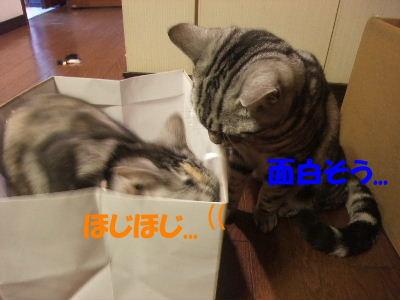 2010年2月ねんりんやリ3-2.JPG