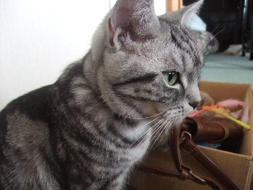 2010年2月横顔7.JPG