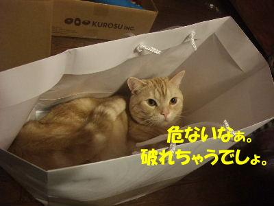 2010年3月みたび6.JPG