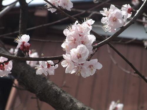 2010年3月世田谷4.JPG