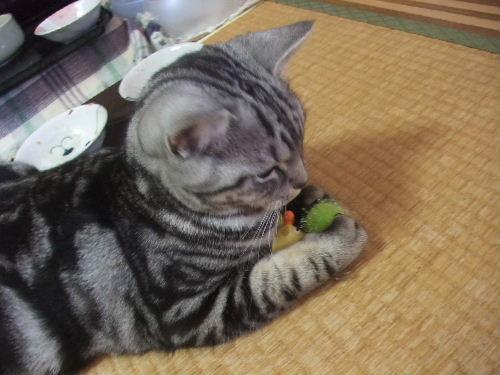 2010年4月きーぷ1.JPG