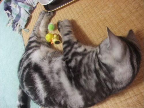 2010年4月きーぷ5.JPG