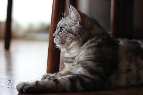 2010年6月子猫3.JPG