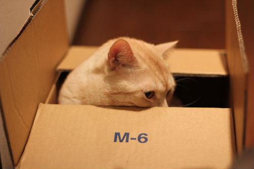 2010年6月BOX2.JPG