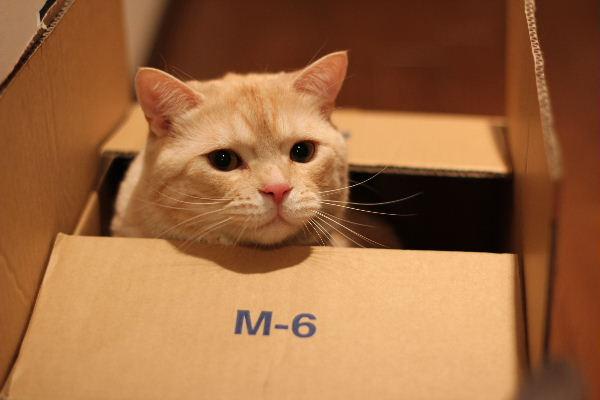 2010年6月BOX3.JPG