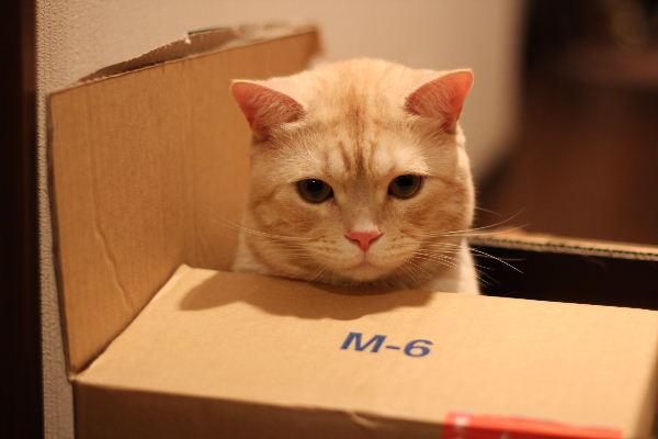 2010年6月BOX4.JPG