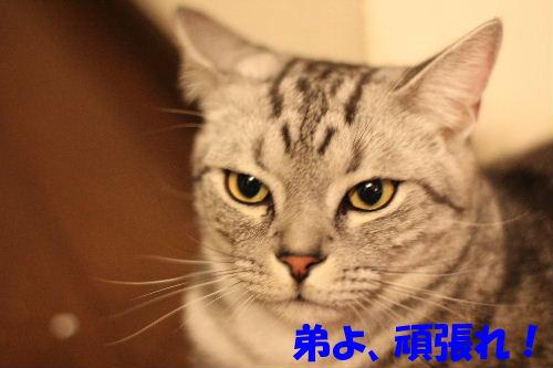 2010年8月かえ5.JPG