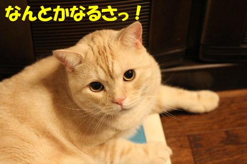 2010年8月かえ7.JPG