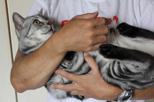 2010年8月抱っこ4-3.JPG