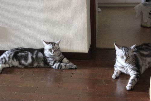 2010年8月抱っこ6-2.JPG