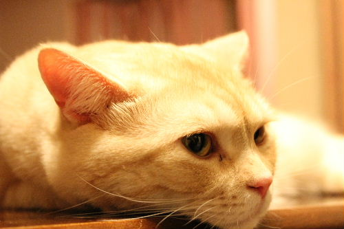 2010年8月猫缶8.JPG