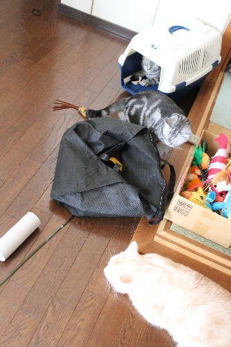 2010年9月エコ9.JPG