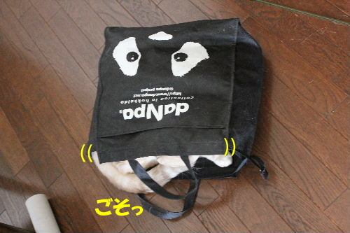 2010年9月バック1.JPG