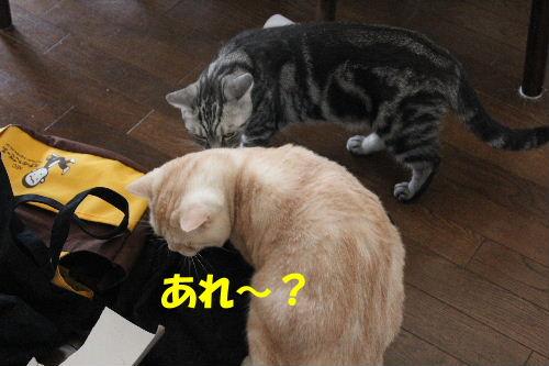 2010年9月バック3.JPG