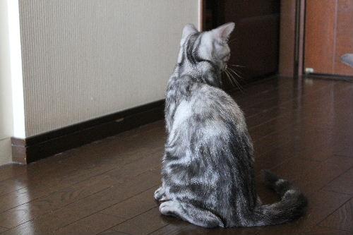 2010年9月姉弟6.JPG