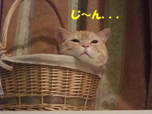 2010_0211圭太2008年12月3日0047.JPG