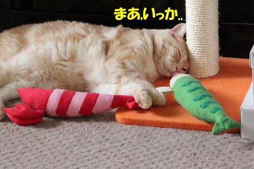 2011年10月えさ1-5.JPG