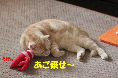 2011年10月えさ2-4.JPG