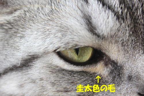 2011年10月かえ3-3.JPG