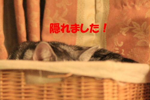 2011年10月はみ6.JPG
