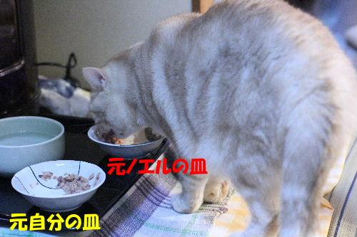 2011年10月わが1-4.JPG