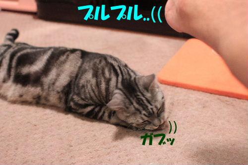 2011年10月エサ2.JPG