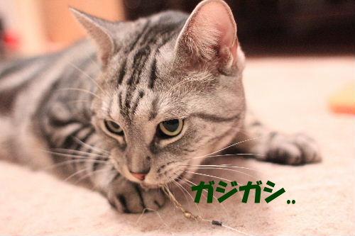 2011年10月エサ3.JPG
